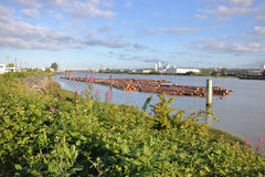 Fraser River industrial e Vancôver sul Foto de Stock Royalty Free