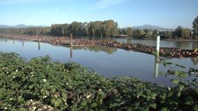 Fraser River Log Boom stock video