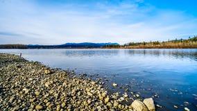 Fraser River sulla riva di Glen Valley Regional Park vicino a Langley forte, Columbia Britannica, Canada immagine stock