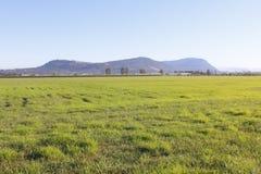 Fraser Valley Grassland Royalty Free Stock Photos