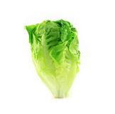 Frash lettuce Stock Images