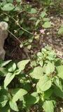Frash leves mooie bloemen Royalty-vrije Stock Fotografie