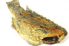 Frasig stekt fisk Royaltyfri Bild