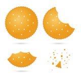 Frasiga ljusbruna smällare i olika ätaetapper stock illustrationer