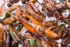 Frasiga stekte kryp, käklarver, gräshoppa, SYRSA Royaltyfria Foton