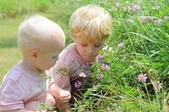 Fratelli che selezionano i fiori immagine stock