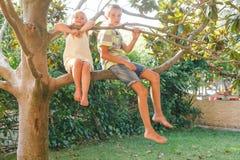 Fratelli germani che si siedono su un albero in un giardino di estate immagini stock