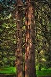 Fratelli nella foresta Immagini Stock