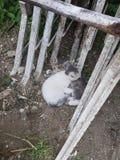 Fratello dei gatti immagini stock
