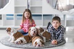 Fratello e sorella che si trovano sul pavimento con i cuccioli del bulldog e del gioco inglesi Fotografia Stock