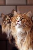 Fratello e sorella del gatto immagini stock libere da diritti