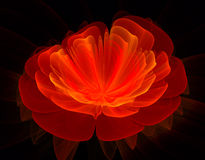Frattale rosso del fiore Immagini Stock