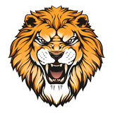 Frattalo del leone