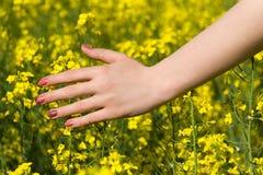 Frau überreichen gelbes Blumenfeld Lizenzfreies Stockbild