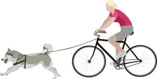 Frau auf einem Fahrrad mit einem Hund Lizenzfreie Stockfotografie