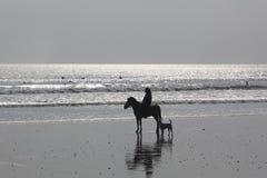 Frau auf Pferd und Hund auf dem Strand Lizenzfreie Stockbilder