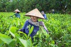 Frau auf Sämlingsbauernhof Stockbild
