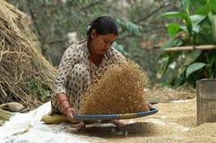 Frau bearbeitet den Weizen zu den Feldern lizenzfreie stockfotos