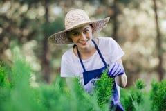 Frau benutzt Gartenarbeitwerkzeug, um die Hecke zu trimmen und schneidet Büsche mit Gartenscheren stockfotografie