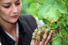Frau bereitgestandene Weinrebe Stockfotografie