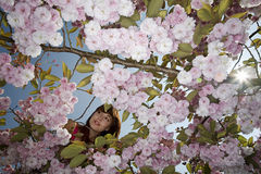 Frau in A blühender Cherry Tree Stockfoto