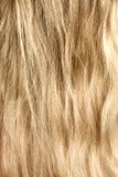 Frau blond und goldish Haar Lizenzfreie Stockfotografie