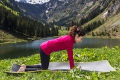 Yoga-Katze-Kuh-Haltung Lizenzfreies Stockfoto - Bild: 37156205