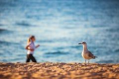 Frau, die auf dem Strand bei Sonnenaufgang läuft stockbild