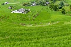 Frau, die auf den Reisgebieten arbeitet Lizenzfreies Stockfoto