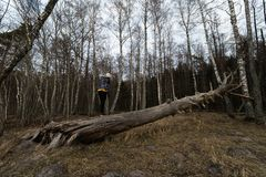 Frau, die auf einem gefallenen Baum in einem Wald am Strand nahe der Ostsee klettert lizenzfreies stockbild