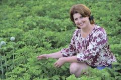 Frau, die auf Kartoffelacker im Sommer sitzt stockbilder