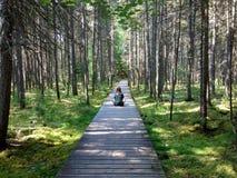Frau, die auf Naturpromenade meditiert Stockbild
