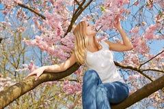Frau, die auf Niederlassung im Kirschbaum sitzt Stockbilder