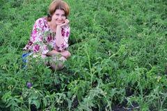 Frau, die auf Tomatenfeld im Sommer sitzt lizenzfreies stockbild