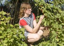 Frau, die Beeren erfasst Stockfoto
