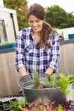 Frau, die Behälter auf Dachspitzen-Garten pflanzt Lizenzfreie Stockfotos