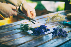 Frau, die Blumenstrauß von natürlichen Lavendelblumen herstellt Stockfoto