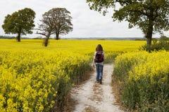 Frau, die durch ein gelbes Rapssamenfeld geht Stockbild