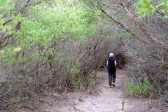 Frau, die durch einen Wald geht lizenzfreies stockbild