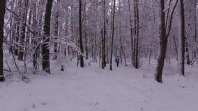 Frau, die durch die Schneewehen im Winterwald geht stock video