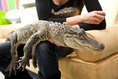 Frau, die ein Krokodil anhält Stockfotografie