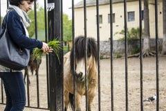 Frau, die ein Pony einzieht Lizenzfreie Stockbilder