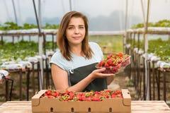 Frau, die eine saftige gebissene Erdbeere in die Kamera, strawber hält Stockfotos