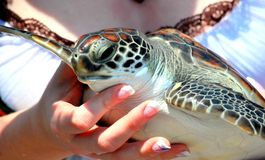 Frau, die eine Schildkröte hält Lizenzfreies Stockfoto