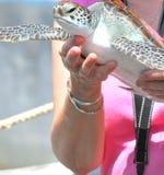 Frau, die eine Schildkröte hält Stockfotografie