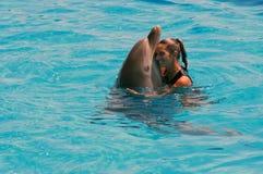 Frau, die einen Delphin im Wasser umarmt Stockfotos