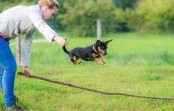 Frau, die einen kleinen Hund ausbildet lizenzfreie stockfotos