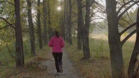 Frau, die in einen Park läuft Die Frau läuft in das Holz morgens Der Frauenzuglauf stock video