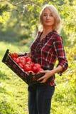 Frau, die einen Tomatenkasten hält stockbilder