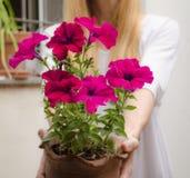 Frau, die einen Topf mit Blumen hält stockbild